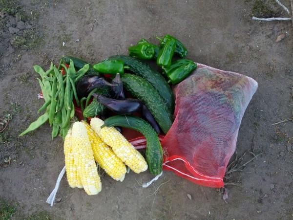 野菜収穫-20120720