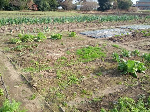 冬の畑-20121129