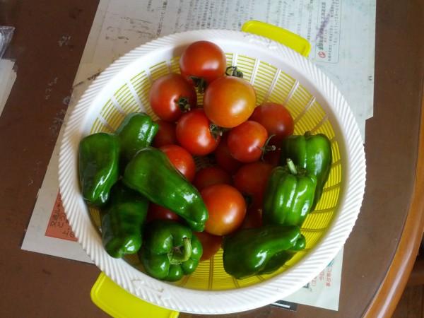 野菜の収穫-20120731