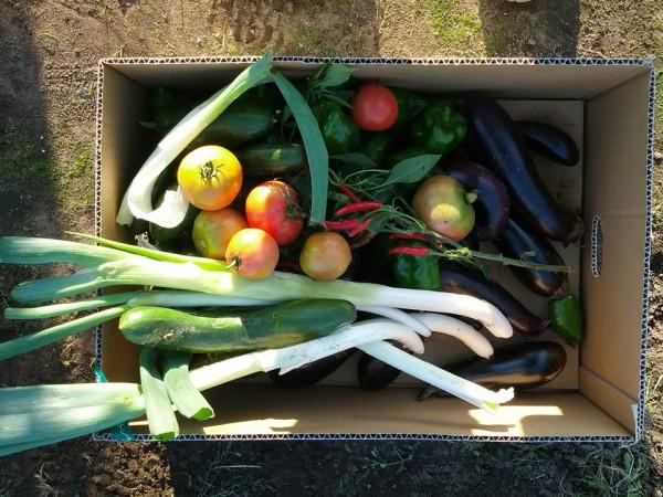 ネギ・トマト・ナス等の収穫