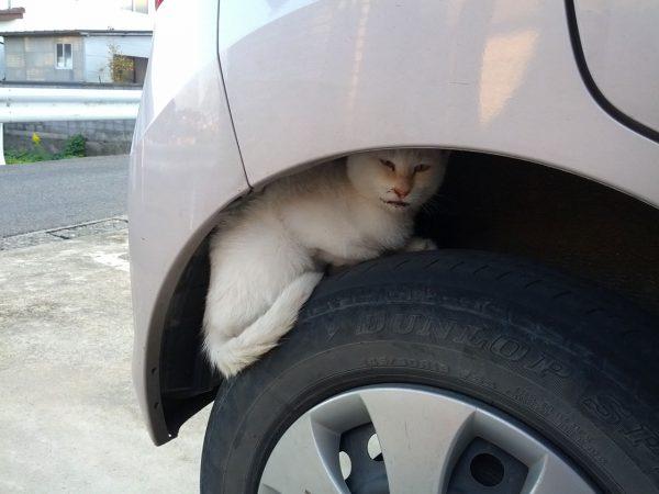 近づいても逃げないネコ