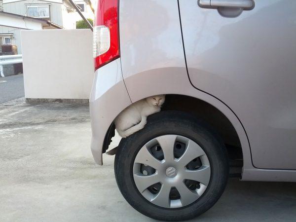 タイヤの上で暖を取るネコ